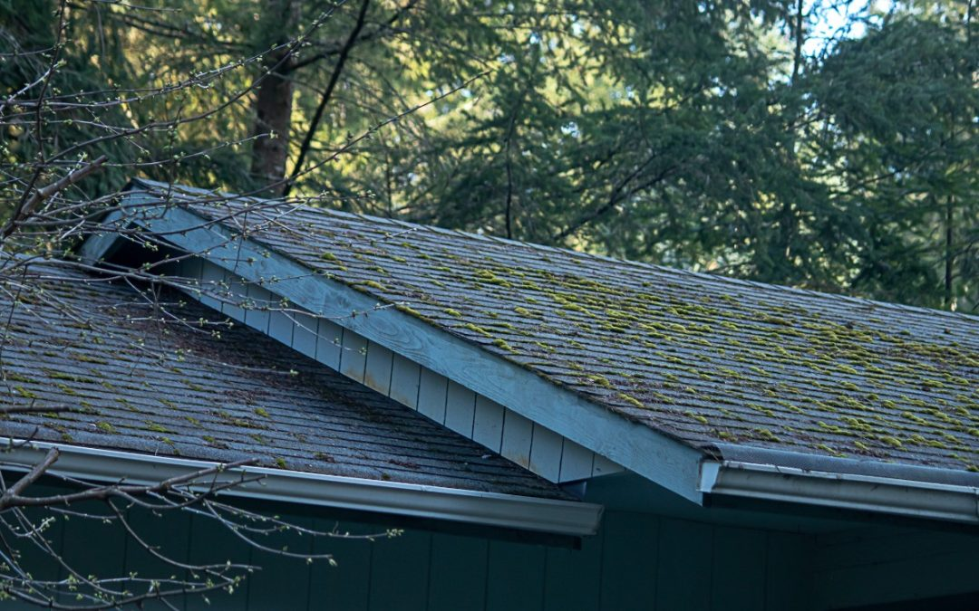 Recognize Mold and Prevent Roof Mold Infestations