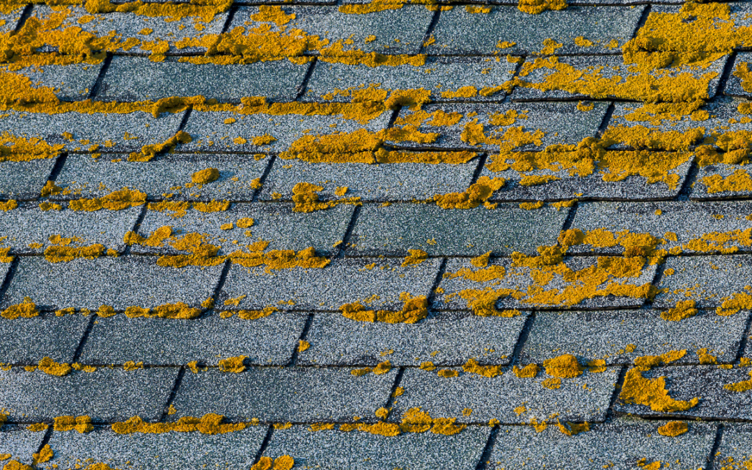 Watch Out for These 4 Summer Roof Problems
